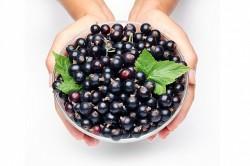 Польза черной смородины при уретрите