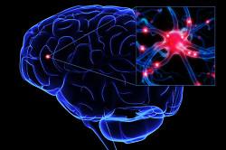 Влияние нервной системы на весь организм