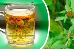 Чай из травы череды для лечения аллергии