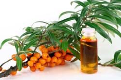 Облепиховое масло для лечения храпа
