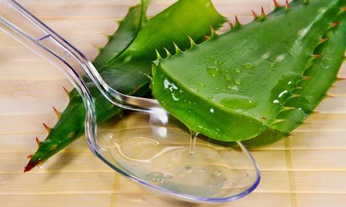 Эффективен в лечении сок алоэ. Пораженные области обрабатывают листом этого растения, разделенным вдоль