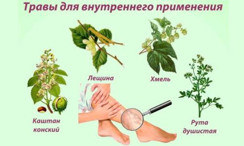 При лечении варикоза надо помнить, что каждое растение отличается индивидуальными особенностями, начиная от эффекта воздействия на организм и заканчивая способом использования